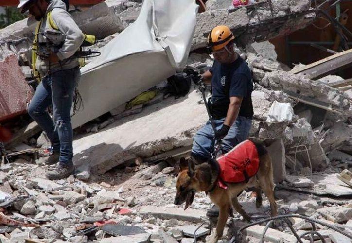 En el mes de septiembre se cumple un año del mega terremoto en México. (Excélsior)