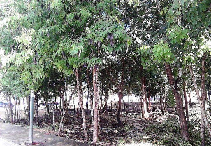 Así lucía la zona en donde se ubicará el parque de la colonia Las Palmas 1. (Cortesía)