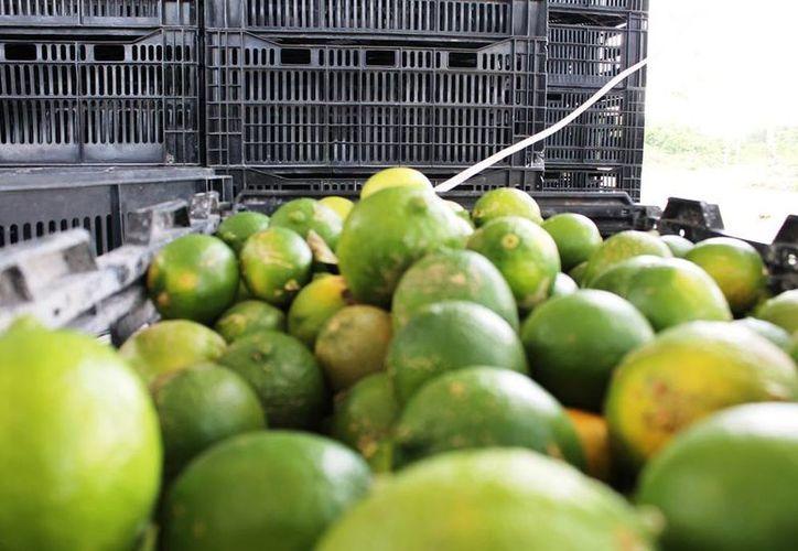 La demanda del limón sube durante la cuaresma debido a que es utilizado para la preparación de diversos mariscos. (Edgardo Rodríguez/SIPSE)