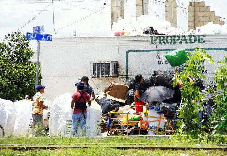 De acuerdo con reglamentos, en Mérida está prohibida la pepena, aunque esta práctica se sigue tolerando. (SIPSE)