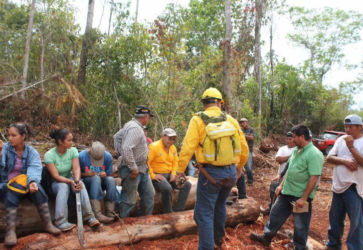 Invierten 2.5 millones de pesos en adiestramiento de 50 brigadas comunitarias. (Edagardo Rodríguez/SIPSE)