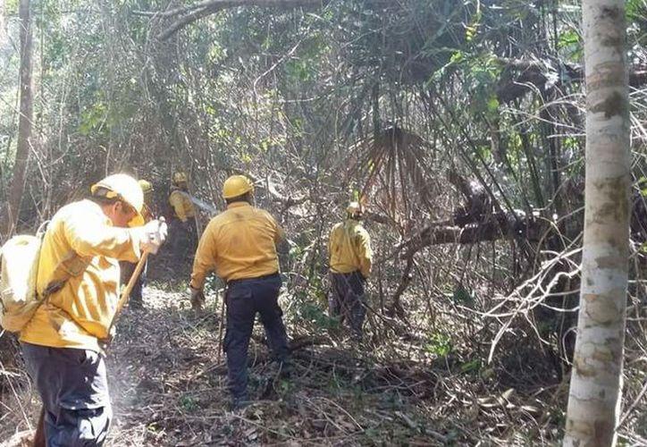 Los incendios reportados en Othón P. Blanco se encuentran en la carretera Mahahual-Xcalak y en el Ejido de Sergio Butrón Casas. De enero a la fecha se han presentado ocho siniestros en el municipio.