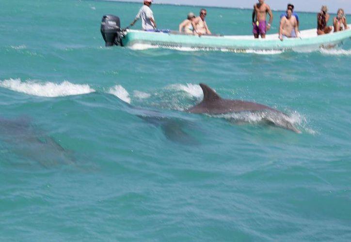 Tulumnenses reclaman un mejor control de las embarcaciones que navegan en la laguna Boca Paila, debido a que éstas representan una amenaza para las especies marinas de dicha zona.  (Cortesía)