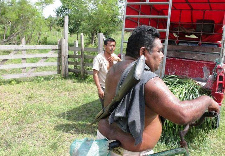 Varios agricultores han pedido apoyo a las autoridades para el registro y compra de armas de fuego. (Edgardo Rodríguez/SIPSE)