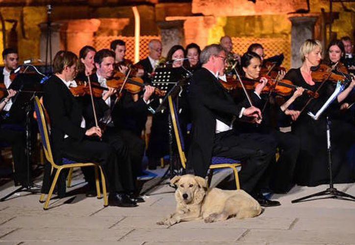 Un perro callejero decidió instalarse 'en primera fila' durante un concierto de música clásica al aire libre, en Turquía. (Impresión de pantalla)