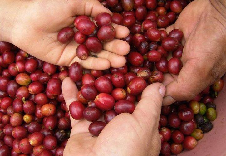 Cada vez más mujeres se convierten en empresarias productoras de café en Colombia. (federaciondecafeteros.org)