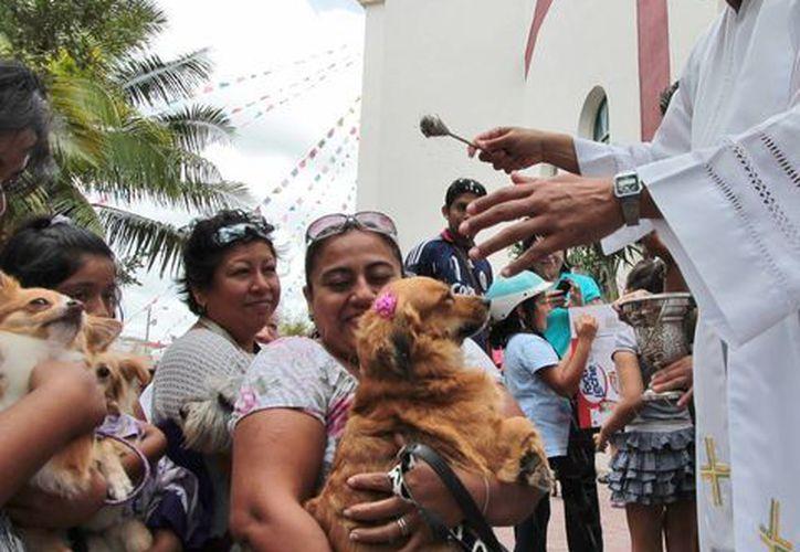 Perros, gatos, tortugas, pericos y hasta un hámster recibieron la bendición del sacerdote. (Gustavo Villegas/SIPSE)