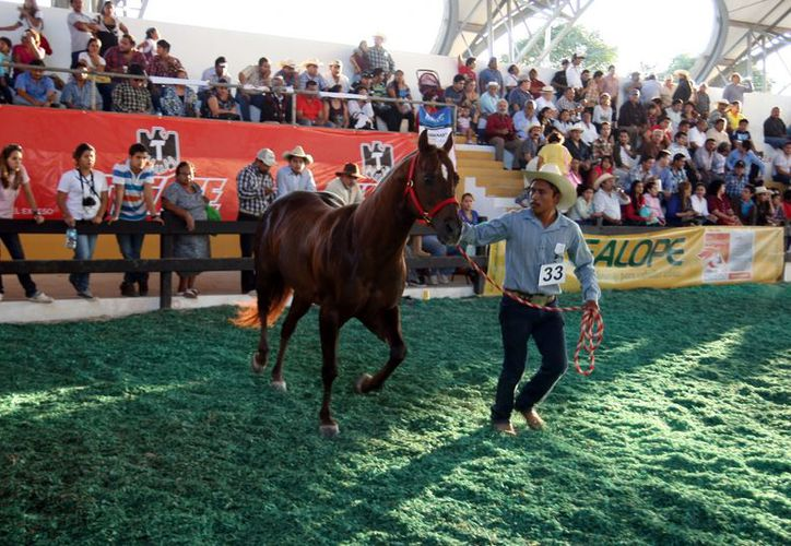 La exhibición de caballos es uno de los eventos con más asistencia. (Milenio Novedades)