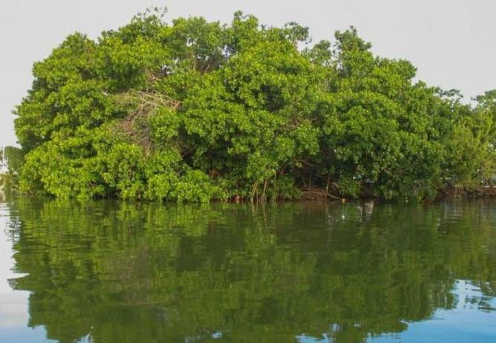 Participan la comunidad científica y funcionarios de la Secretaría de Ecología y Medio Ambiente. (Redacción/SIPSE)