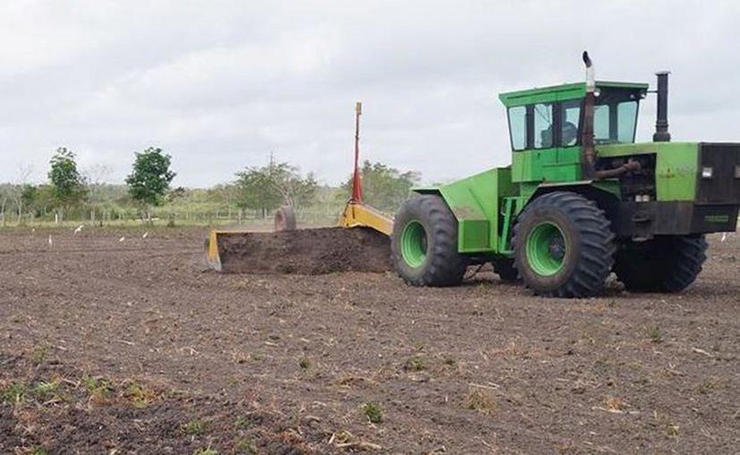 """Menonitas asentados en """"El Paraíso"""" querían remover vegetación para la realización de cambio de uso de suelo. (Contexto)"""