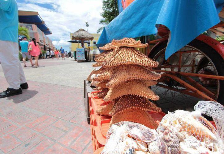 Autoridades de Cozumel y federales se reunieron para buscar la forma de evitar la venta de caracoles y estrellas de mar. (Gustavo Villegas/SIPSE)