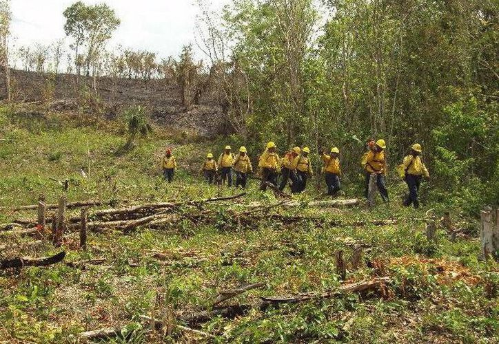 """En el incendio """"Tunich-Ha"""" de Solidaridad, participan 197 brigadistas de la Conafor. (Redacción/SIPSE)"""
