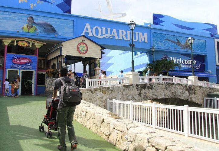Las muestras de los tiburones y el pez ronco que murieron en el acuario de plaza La Isla siguen en proceso de análisis. (Luis Soto/SIPSE)