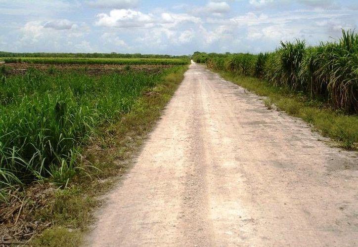 """Con una inversión de dos millones de pesos se benefician 40 productores cañeros con los nuevos caminos, """"saca cosechas"""". (Edgardo Rodríguez/SIPSE)"""