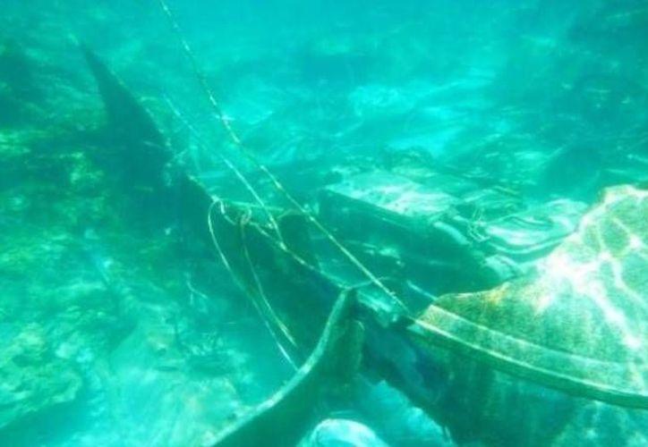 El pesquero 'Tío Lencho' yace en el fondo marino en el Arrecife Alacranes. (Óscar Pérez/SIPSE)