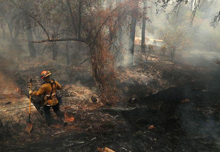La sequía y los vientos que sufre el estado, 'alimenta' a los incendios. (Milenio)