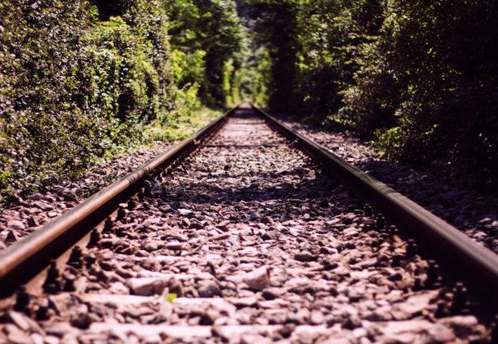 Miembros del Consejo Mundial de Viajes y Turismo no han mostrado interés en invertir en el Tren Maya.  (Public Domain Pictures)
