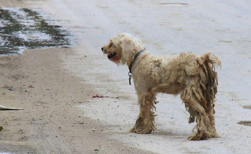 El Ayuntamiento tratará de evitar el maltrato a las mascotas. (Gustavo Villegas/SIPSE)