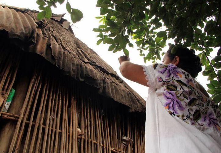 En la unidad de mediación de Motul se atenderá a una importante población que es mayahablante. (SIPSE)