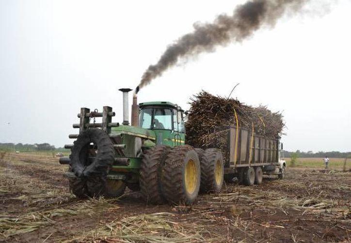 Se cuenta con unos 50 tractores, 150 alzadoras y cerca de 500 camiones. (Carlos Castillo/SIPSE)