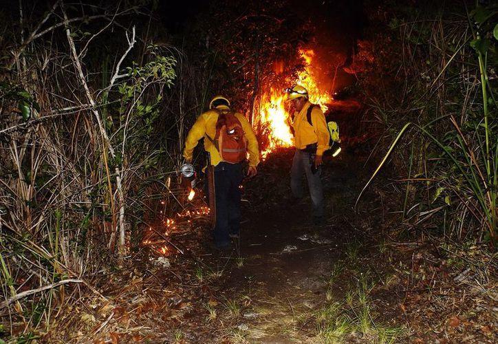 """Elementos de la Conafor atienden el incendio denominado """"El Makech 1"""". (Edgardo Rodríguez/SIPSE)"""