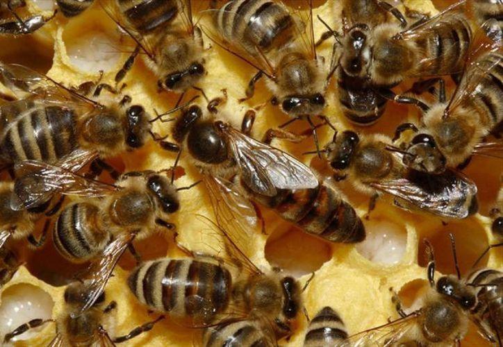 Loa apicultores no pudieron recuperar lo invertido durante el año. (Javier Ortiz/SIPSE)