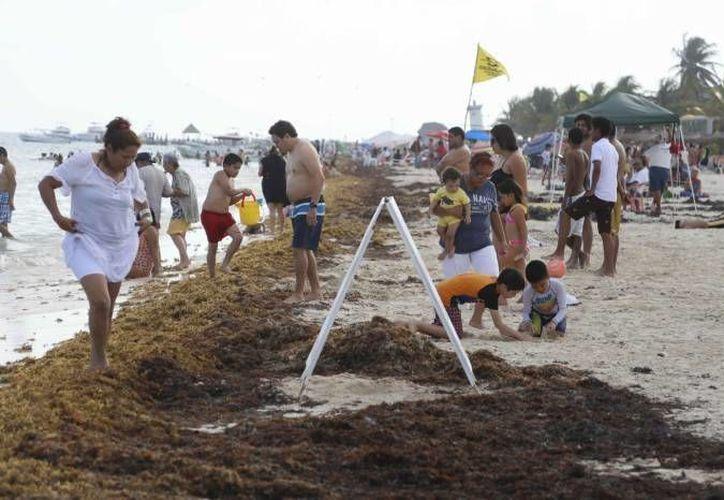 La llegada del sargazo a las costas de Cancún y Puerto Morelos son un problema que ha afectado la imagen de la costa. (Archivo/SIPSE)