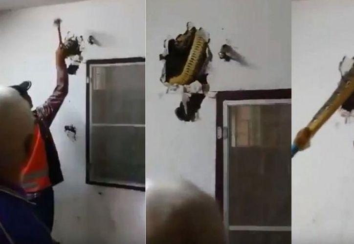 El habitante de la casa, registró en video el momento en el que sacaban al reptil. (Captura de video)