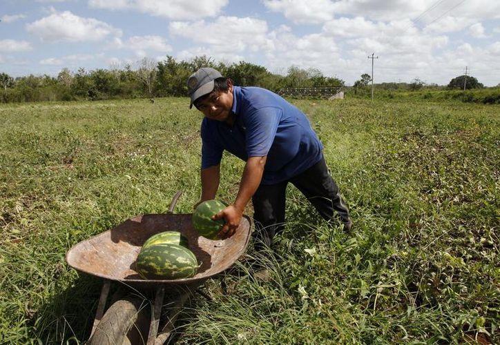 Los productores locales podrán acceder a financiamiento estatal para desarrollar proyectos productivos. (Cortesía)