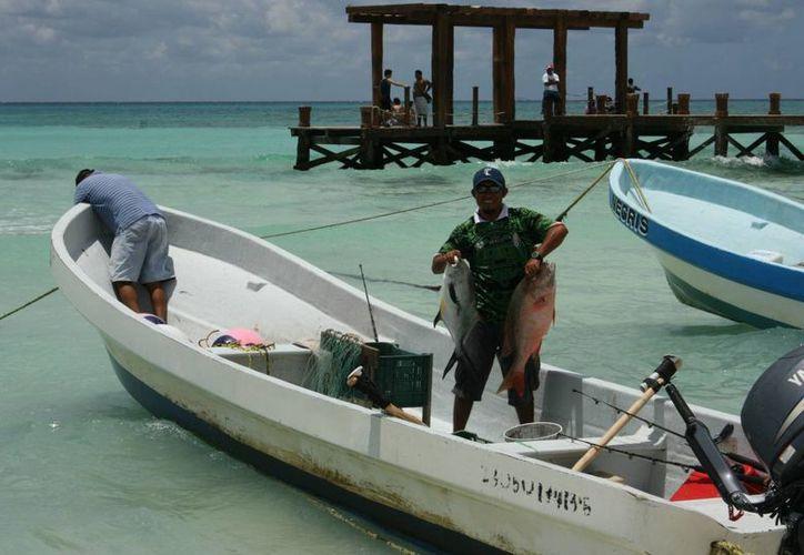 A partir del próximo domingo 75 pescadores ofrecerán pescado fresco en el centro de Playa del Carmen.  (Luis Ballesteros/SIPSE)