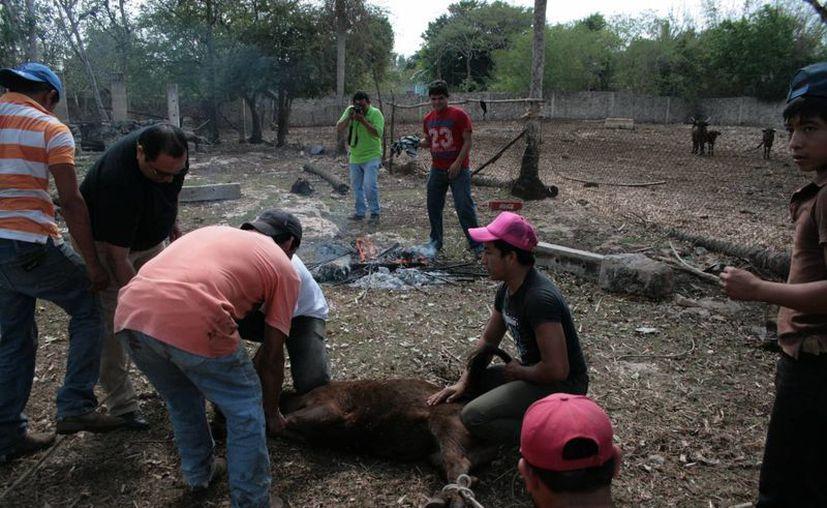 'Juan Tuul' es considerado como un protector de los vaqueros en Yucatán. (SIPSE/Archivo)