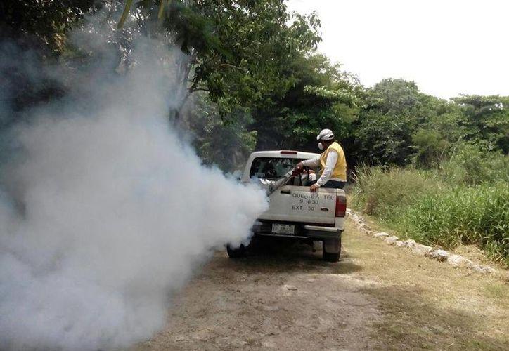 Corrientes de aire trajeron a Mérida una plaga de supermoscos que no transmiten dengue, zika o chikungunya. (Fotos: SIPSE)