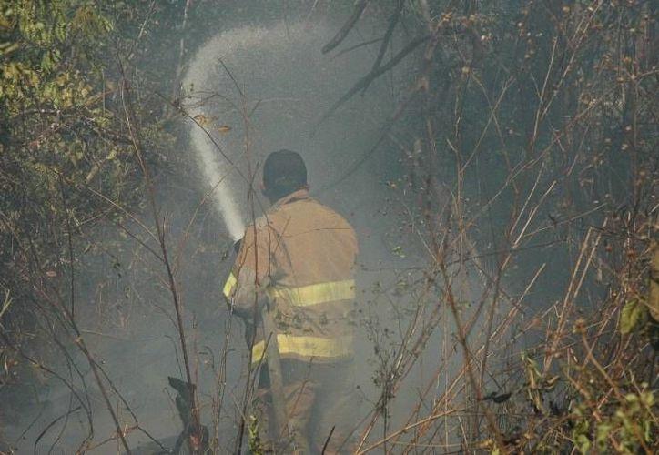 """La denominada """"zona roja"""" con mayor incidencia de incendios forestales la componen los municipios de Othón P. Blanco, Bacalar, Lázaro Cárdenas y Benito Juárez. (Edgardo Rodríguez/SIPSE)"""