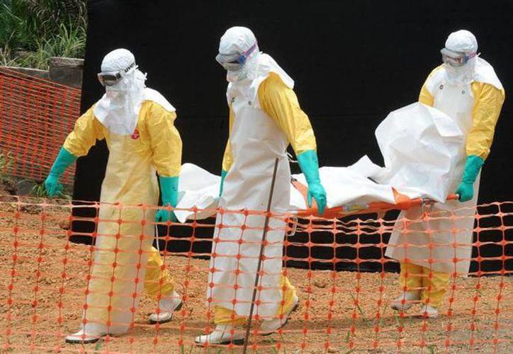 Los trabajadores de salud son los más afectados, con 340 muertes de cada 592 casos. En la imagen un grupo de profesionales cargan el cuerpo de un enfermo de ébola. (Milenio Novedades)
