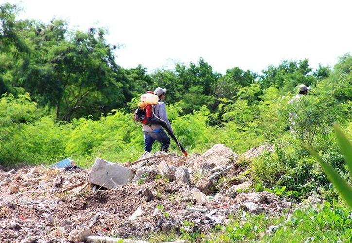 Aseguran que en esta temporada de lluvias las brigadas de Vectores de la Secretaría de Salud no se han presentado en la comunidad, como lo hicieron posteriormente a las inundaciones de junio. (Edgardo Rodríguez/SIPSE)