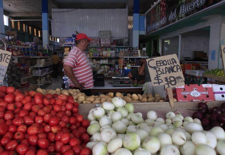 El proyecto contempla cubrir la demanda local y regional de hortalizas. (Harold Alcocer/SIPSE)