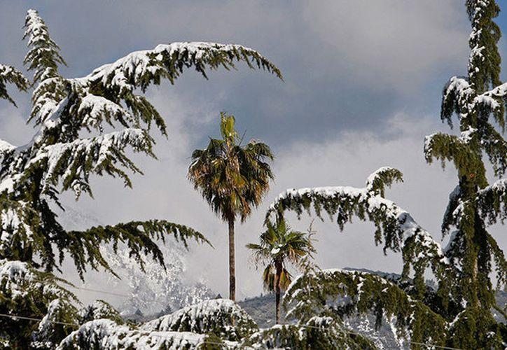 La grabación concluyen con el hombre sin camisa recostado por unos segundos en el césped cubierto de nieve. (Foto: RT)