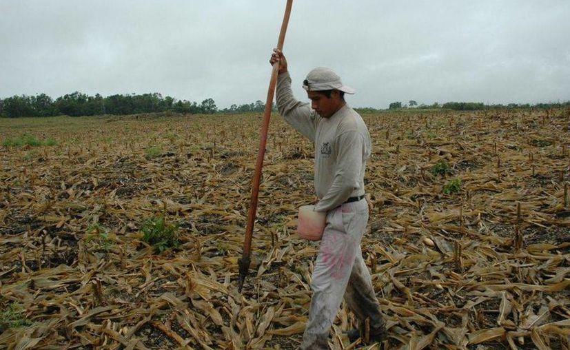 Se realizó la dispersión de recursos a favor de diversos ejidos de José María Morelos y Felipe Carrillo Puerto. (Eddy Bonilla/ SIPSE)