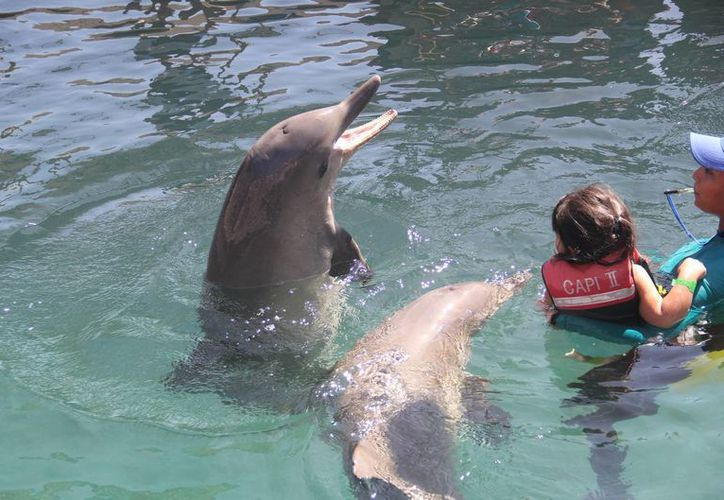 """No se especifica en el decreto sobre el uso de animales marinos en acuarios. Imagen de """"Mundo Marino"""", uno de los acuarios más espectaculares de Colombia, con más de 276 especies. (Foto de Archivo/Notimex)"""