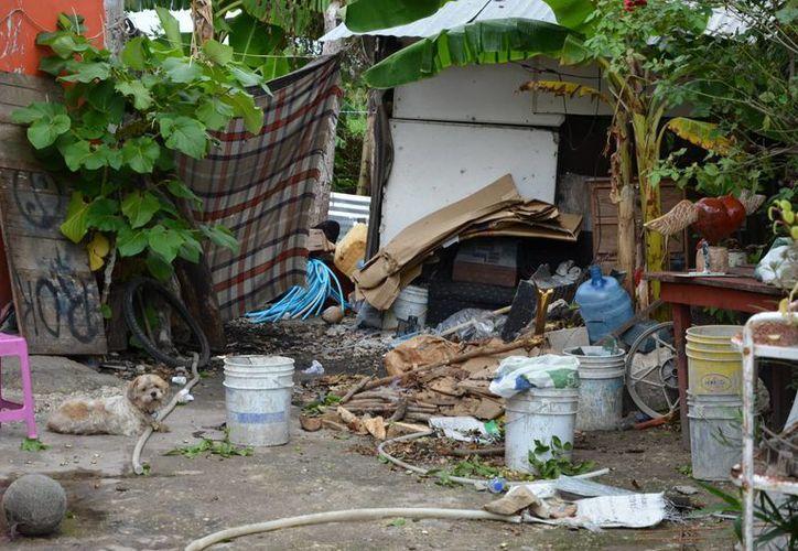 Con el inicio de la temporada de lluvias el paludismo puede tener un ligero incremento. (Gerardo Amaro/SIPSE)
