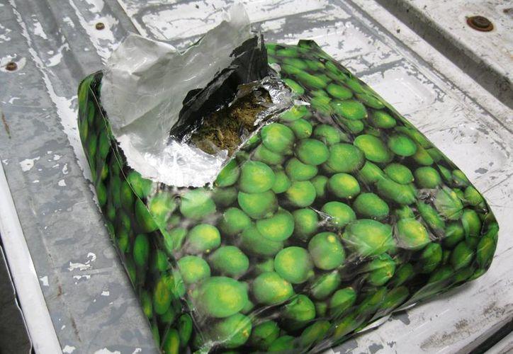 Agentes de Aduana y Protección Fronteriza aseguraron más de una tonelada y media de mariguana que pretendían ingresar a EU en dos cargamentos comerciales de limas y zanahoria.  (Cortesía CBP/vía Notimex)