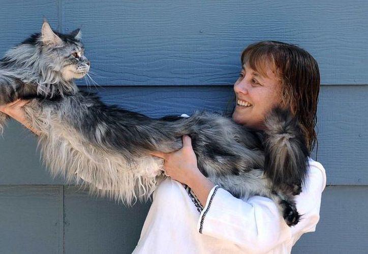 El Libro de Records Guinness declaró a Stewie el gato más largo del mundo en agosto del 2010. (Agencias)