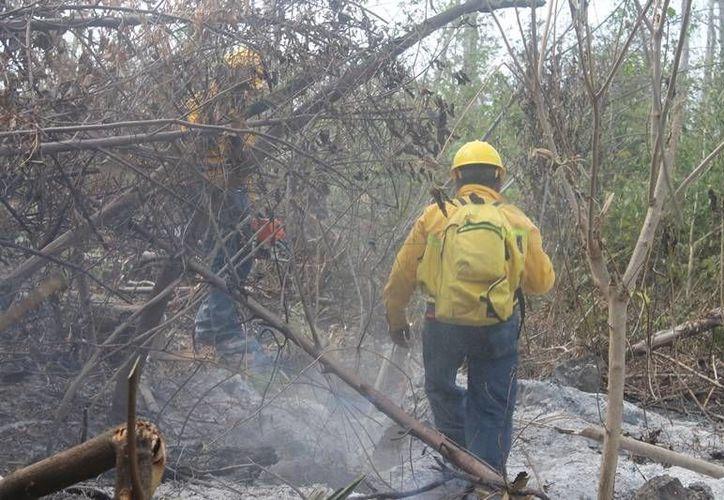 El viento ayuda a propagar las llamas de un lugar a otro, lo que agrava la devastación. (Redacción/SIPSE)