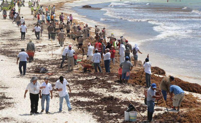 Los trabajadores limpian una de las playas más afectadas. (Victoria González/SIPSE)
