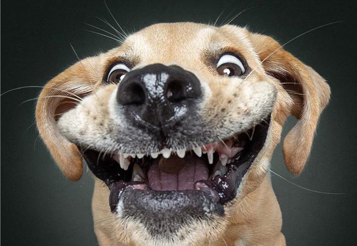 El fotógrafo Christian Vieler  es experto en captar a perros con expresiones de locura y éxtasis. (Instagram/@vieler.photography)