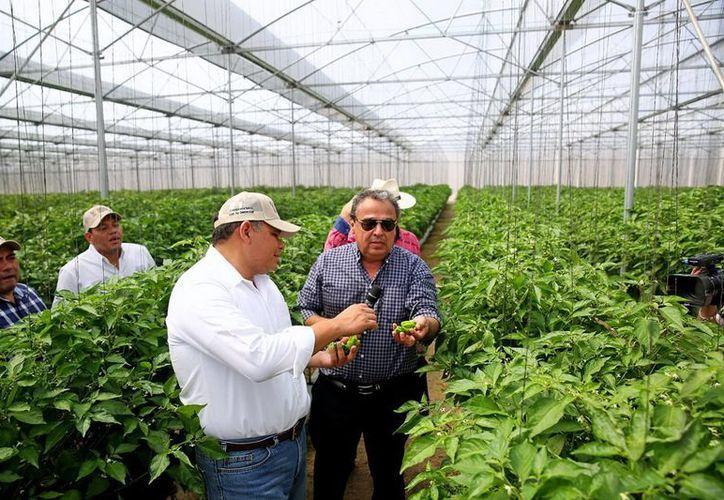 La entidad presentó un crecimiento acumulado del sector agropecuario que alcanzó los 2.9 puntos porcentuales. (Milenio Novedades)