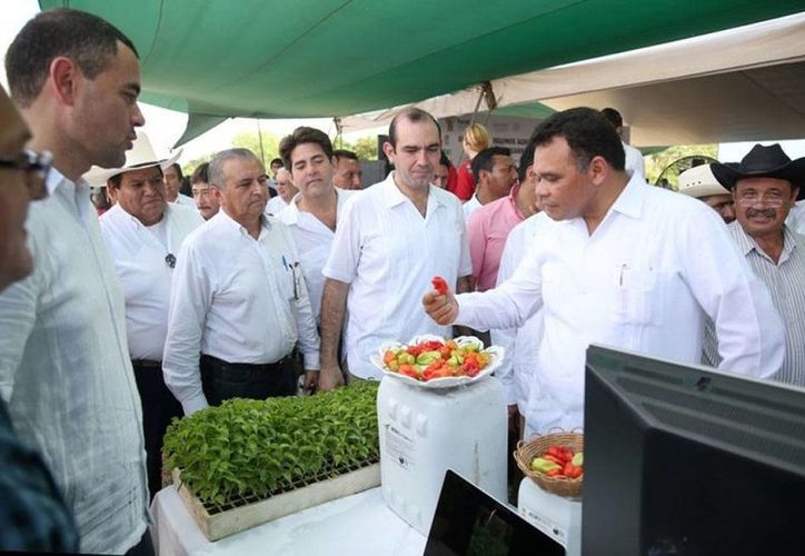 El gobernador de Yucatán, Rolando Zapata Bello, entregó este sábado apoyos a productores de chile habanero. Hoy domingo sólo tiene un evento en su agenda. (yucatan.gob.mx)