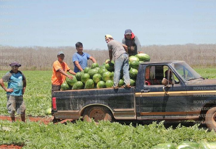 Agrícolas quintanarroenses en busca de opciones laborales en Canadá. (Foto: Benjamín Pat/SIPSE)