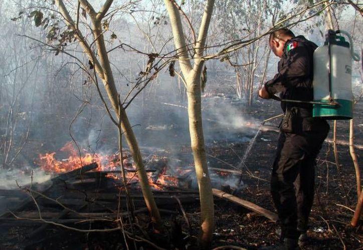 A diferencia de otros años, a la fecha es mayor el número de incendios que ha atendido la Conafor en Yucatán. Pero el impacto en la vegetación ha sido menor debido a que se ha tratado principalmente de matorrales, que vuelven a crecer con rapidez. (Milenio Novedades)