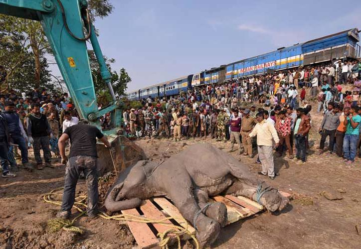 India tiene alrededor de 30 mil elefantes. (Reuters)